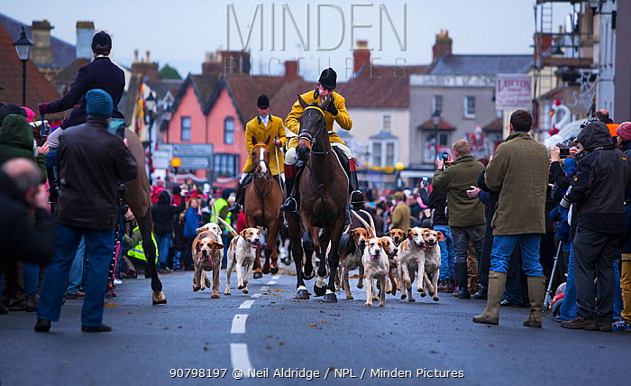 Hunt master and his hounds lead out England's oldest fox hunt - the Berkeley Hunt - from the town of Thornbury, Gloucestershire, England, UK. 26th December 2014. Winner of the Portfolio Category of Nature Photographer of the Year Competition 2018.
