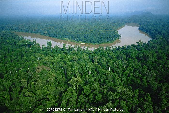Aerial view of an oxbow lake in the Kinabatangan Wildlife Sanctuary, Sabah, Borneo, Malaysia