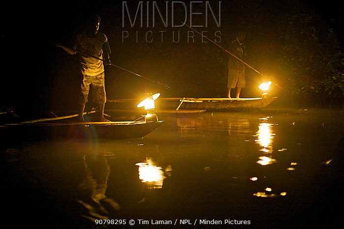 Men spearfishing at night from the bows of canoes in Mayalibit Bay. Waigeo Island, West Papua, Indonesia, April 2007