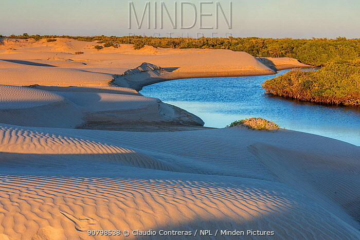 Sand dune and mangrove forest, Magdalena Bay, Baja California, Mexico, February
