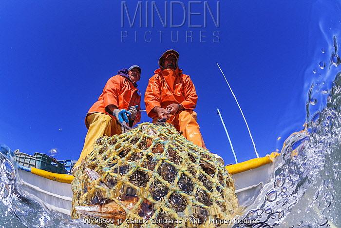 Fisherman collecting Pen Shell Clam (Atrina maura), San Ignacio Lagoon, El Vizcaino Biosphere Reserve, Baja California, Mexico, March