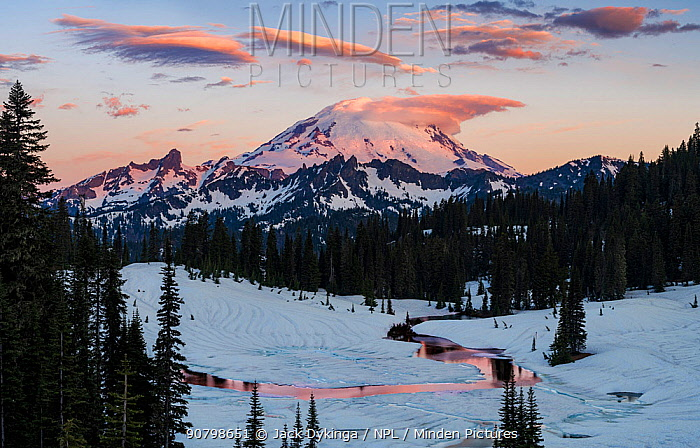 Glaciers on Mount Rainier, with dawn light on lenticular clouds hanging about the summit's crevasses on the East facing slope. Washington, USA. June 2018.