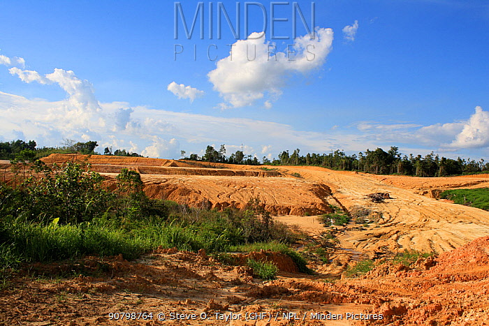 Effects of deforestation, bleaching of soil and loss of topsoil, Central Kalimantan, Indonesian Borneo. June 2010.