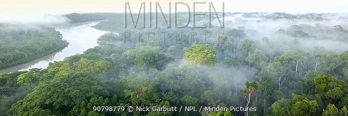 Aerial view of lowland Amazonia rainforest in morning mist. Manu Biosphere Reserve, Amazonia, Peru. November 2017.