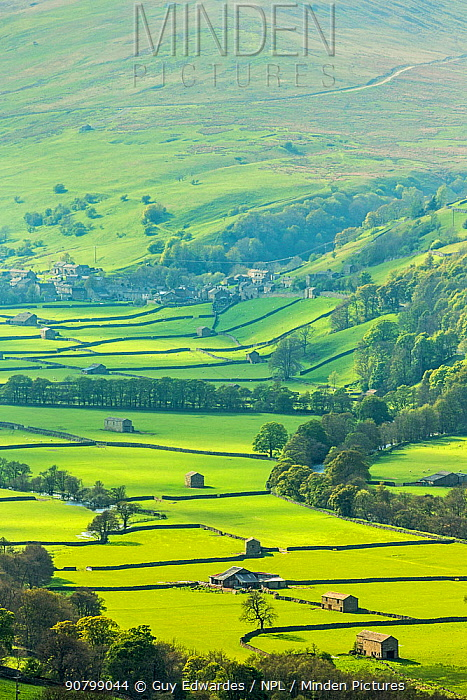 Landscape of fields with stone barn with dry stone walls, Gunnerside, Swaledale, North Yorkshire, England, UK. May 2013.