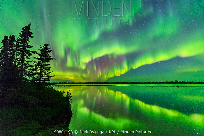 Aurora Borealis reflected in Polar Lake, conifers silhouetted at edge. Near Great Slave Lake, Northwest Territories, Canada. September 2018.