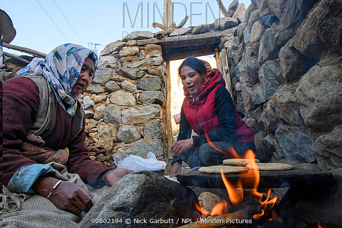Women baking kulcha (flat bread) on traditional open fire in an ecotourism lodge. Part of a broader eco tourism initiative to augment their income and change local attitudes towards snow leopards (Panthera uncia) Ulley Valley, Himalayas, Ladakh, northern India.