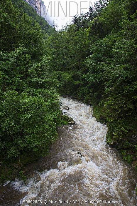 River Bourne and surrounding deciduous woodland. Gorges de la Bourne, Vercors Regional Natural Park, Rhone-Alpes, France. June 2018.