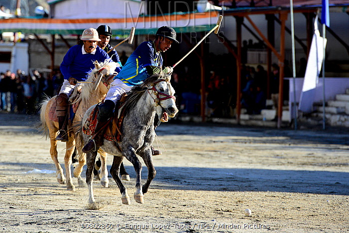 Men riding ponies at a polo tournament in Leh city at 3520 meters altitude, Ladkh, India. September 2018.