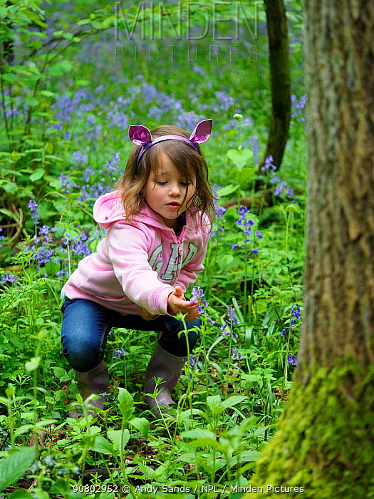 Girl looking at Bluebell (Hyacinthoides non-scripta) in woodland, Hertfordshire, England, UK, May. Model released.