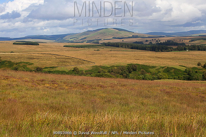 Landscape of Langholm moor, Dumfries & Galloway, Scotland., UK, August.