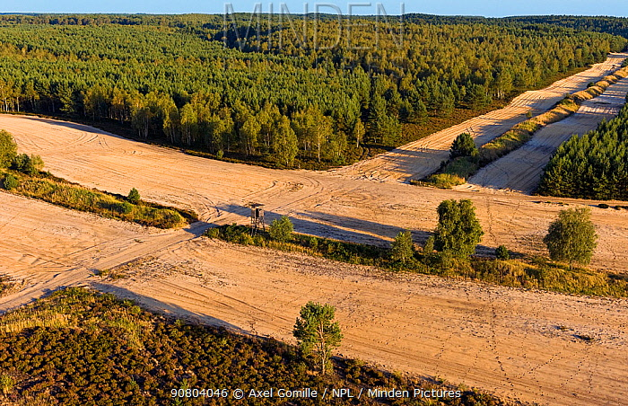 Military training ground, with bare land to prevent fires from spreading if caused during training manoeuvrers. This area is habitat to a population of wild Wolves (Canis lupus) as well as other rare species. Saxony, Germany.
