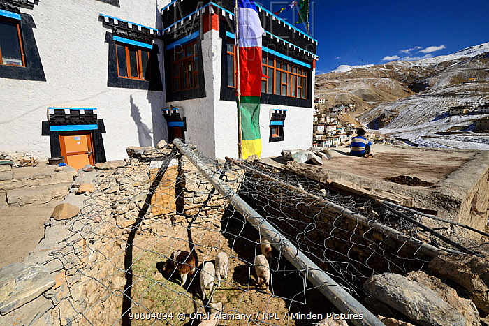 Sheep pen covered in wire to protect livestock from Snow leopard (Pantehera uncia) attack in the village of Kibber in Spiti valley, Cold Desert Biosphere Reserve, Himalaya mountains, Himachal Pradesh, India