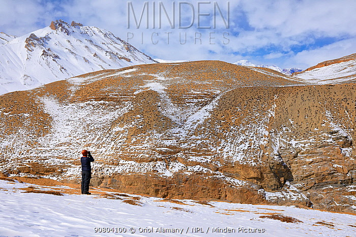 Woman looking with binoculars for Snow leopard (Panthera uncia) in Spiti valley, Cold Desert Biosphere Reserve, Himalaya mountains, Himachal Pradesh, India, February. Model released.