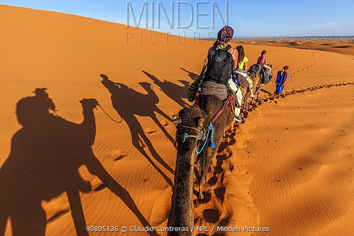 Tourists trekking on domestic Arabian / Dromedary Camel (Camelus dromedarius) with shadows cast on sand, Erg Chebbi dunes near Merzouga, Sahara Desert, Morocco, October