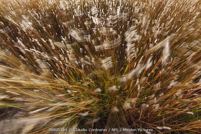 Grassland, Prairie, Janos Biosphere Reserve, northern Mexico, October