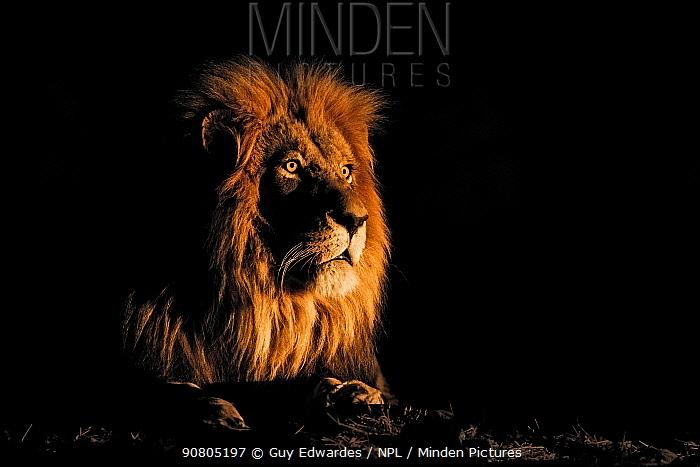 Lion (Panthera leo) male portrait, Kruger National Park, south Africa.
