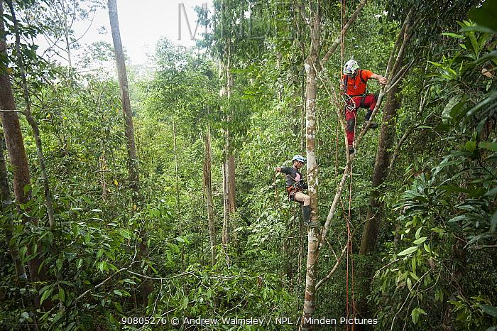 Tree climbing training for Human Orangutan Conflict Response Unit (HOCRU) team members in a forest in North Sumatra, April 2015