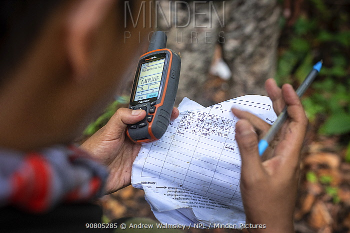 Rangers collecting data in primary rainforest, protecting the native wildlife such as elephants, rhinos, tigers and orangutans. September 2018.