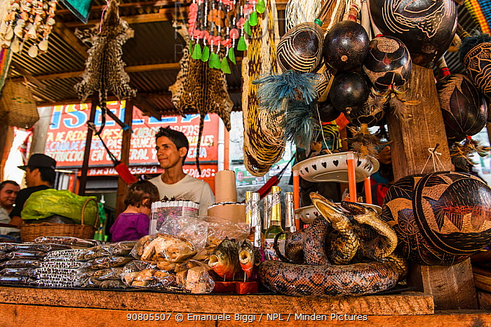 Animal body parts including snakes and pirhanas for sale at Belen market in Iquitos, Peru. July 2014