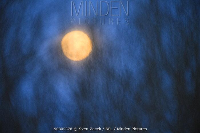 Rising full moon through trees, soft focus. Tartumaa, Southern Estonia. March.