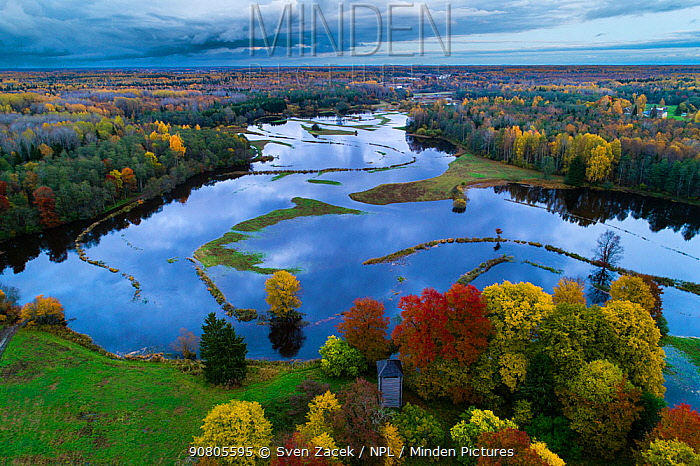 River Pedja and surrounding forests in autumn flood, aerial view. Alam-Pedja Nature Reserve, Jogevamaa, Central Estonia. October 2017.