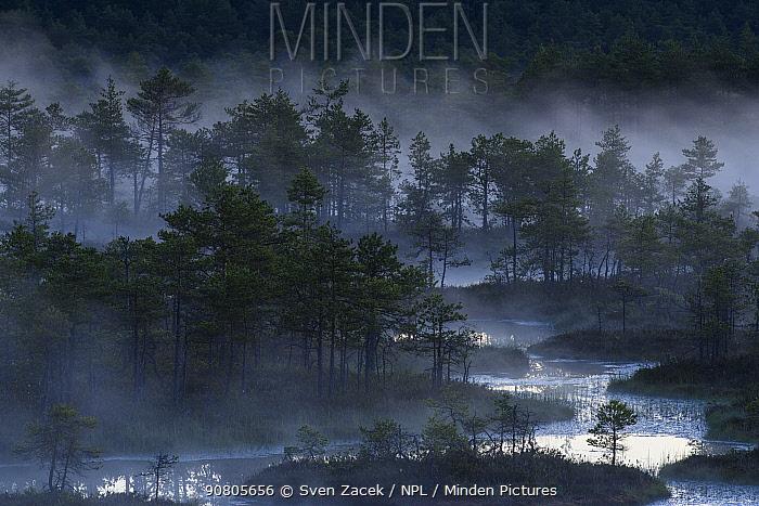 Mist over bog with conifers in pre-dawn light. Endla Nature Reserve, Jogevamaa, Central Estonia. June 2016.