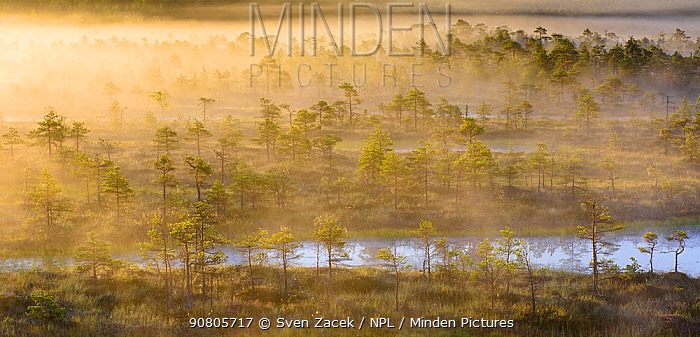 Morning mist over bog scattered with trees. Endla Nature Reserve, Jogevamaa, Central Estonia. August 2015.