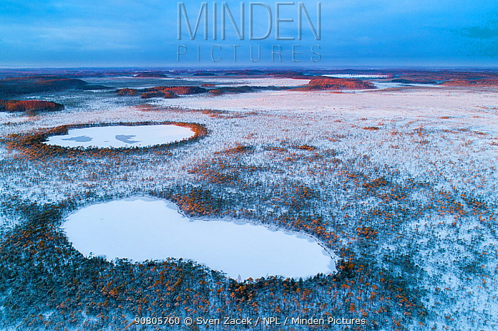 Aerial view of frozen bog lakes at dawn. Meenikunno Nature Reserve, Polvamaa, Southern Estonia. November 2018.