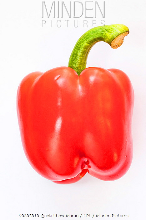 Red bell pepper on white background.