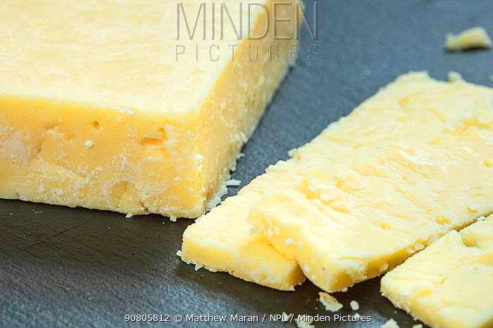 Cheddar cheese on slate board