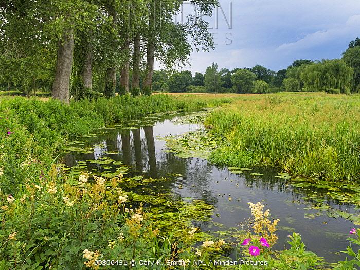 River Wensum in summer Norfolk, England, UK. August.