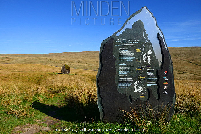 Maen Lila interpretation display sign molded in the shape of the Bronze Age standing stone which is located in the background, Brecon Beacons National Park, Breconshire, Wales, UK. September 2018.