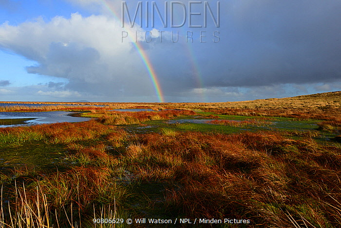 Pwl Gwy-rhoc and associated blanket bog with reddish tinged leaves of Cotton-grass and a carpet of Sphagnum, Mynd Llangatwg, with a rainbow in the background, Brecon Beacons National Park, Breconshire, Wales, UK. November 2018.