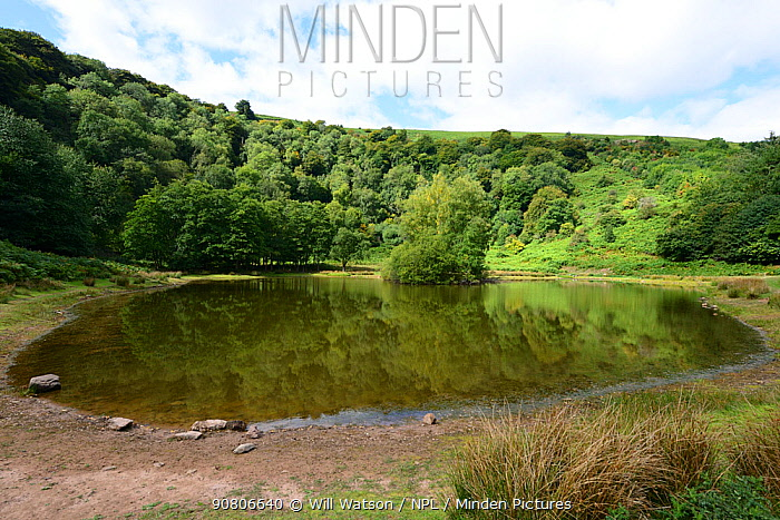 The punchbowl, a man-made lake in a glacial cwm surrounded by ancient woodland owned by the Woodland Trust. The Blorenge, Brecon Beacons National Park, Monmouthshire, Wales, September 2018.