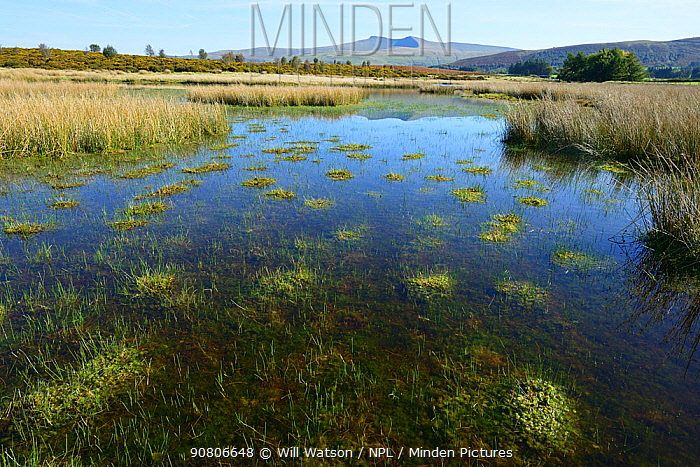 Dystrophic pond on Myndd Illtud Common SSSI, showing cushions of Sphagnum Moss, with Pen y Fan, the highest mountain in the Brecon Beacons National Park in the background, Breconshire, Wales, Spetmeber 2018.