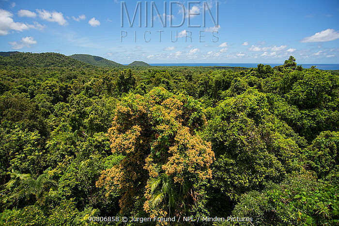 View of tree canopy from Daintree Rainforest Observatory's crane. Daintree Rainforest Observatory, Queensland, Australia February 2015