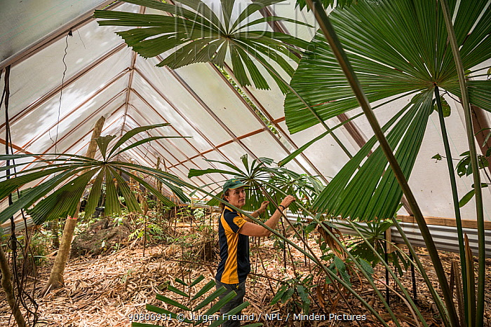 James Cook University's Susan Laurance leads the Daintree Drought Experiment in far north Queensland. The experiement combines the efforts of plant physiologists, ecologists, soil experts, climatologists and hydrologists to assess the varying responses of plants to drought, from their roots to their highest pinnacles in the forest. Others will study how smaller animals such as insects respond to drought. This experiement is based at the Daintree Rain-