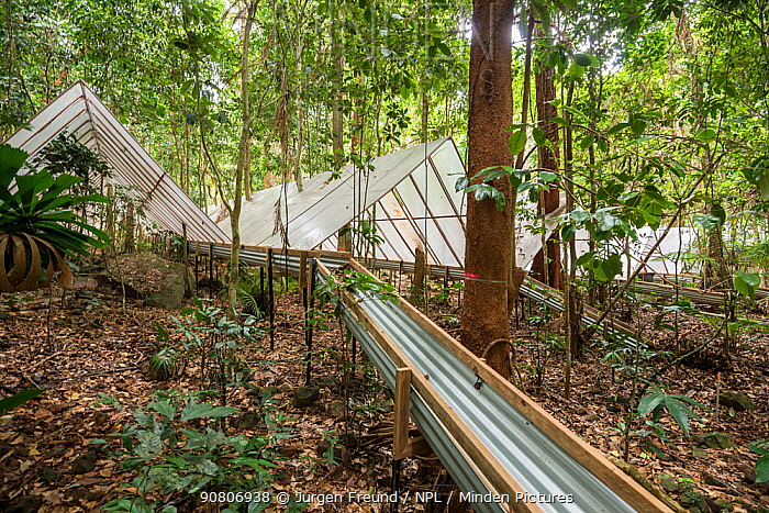 Guttering to redirect water at the Daintree Drought Experiment, where rainforest plants grown under cover to see how they respond to drought. Daintree Rainforest Observatory, northern Queensland, Australia. September 2015