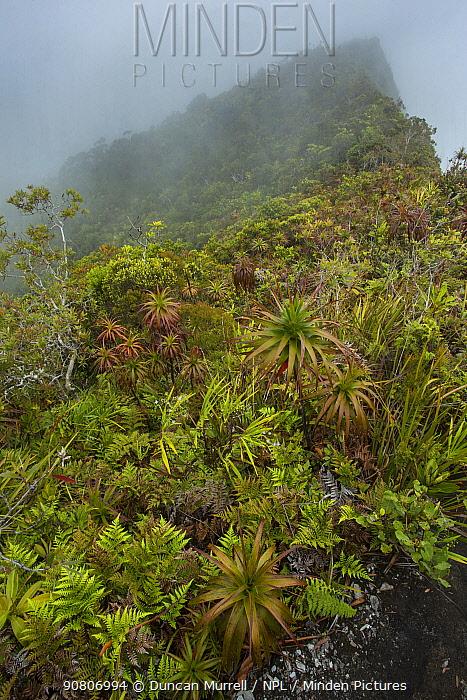 Subalpine vegetation, Mount Panie, New Caledonia.