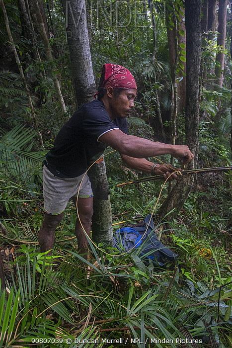 Batak man preparing a rattan loop for a tree-climbing aid in Cleopatras Needle Critical Habitat, Palawan, the Philippines. September 2016.