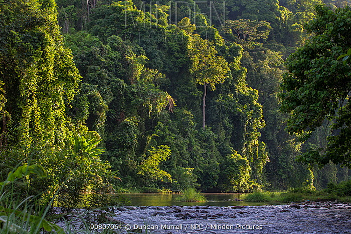 Rainforest and river outside the Batak village of Sitio Manggapin in Cleopatra's Needle Critical Habitat, Palawan, Philippines.