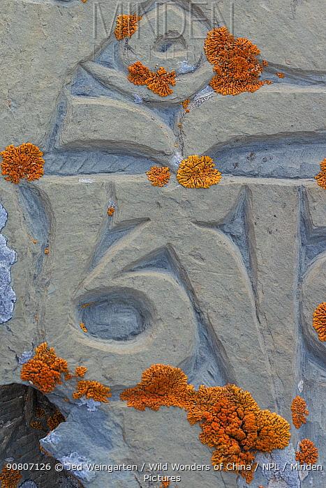 Lichen growing on old mani stones. Serxu County, Garze Prefecture, Sichuan Province, China.