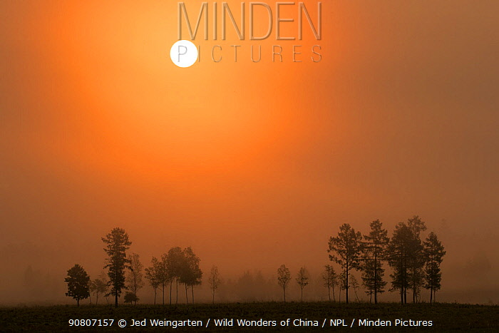 Sunrise backlights some outlying trees of Heilongjiang's boreal forest. Yichun City, Heilongjiang Province, China.