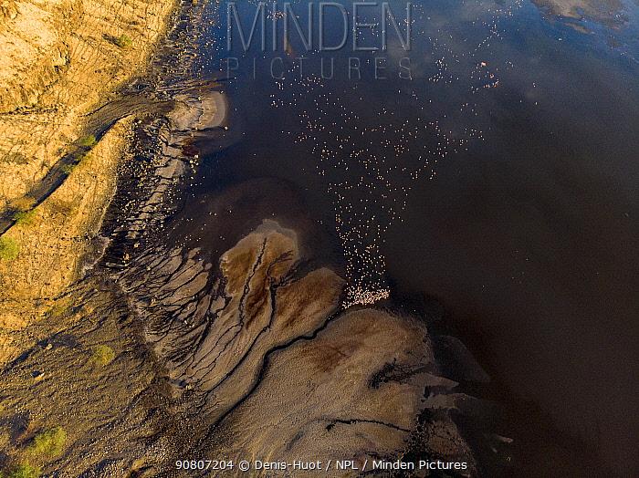 Lesser flamingoes (Phoeniconaias minor), aerial view, lake Magadi, Rift valley, Kenya