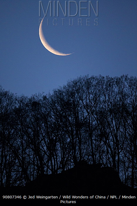 Setting crescent moon, Tangjiahe Nature Reserve, Sichuan Province, China. April 2015.