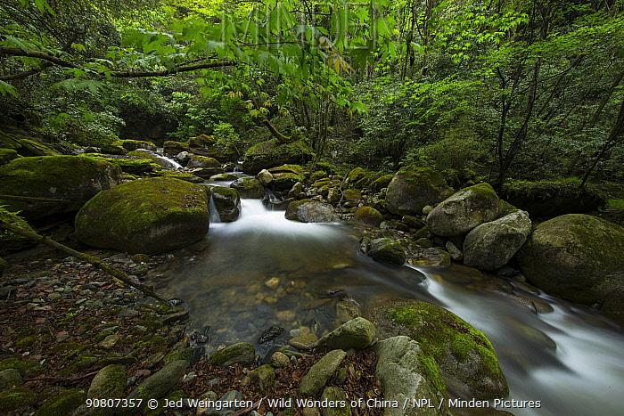 Small creek / stream in Tangjiahe Nature Reserve, Sichuan, China. April.