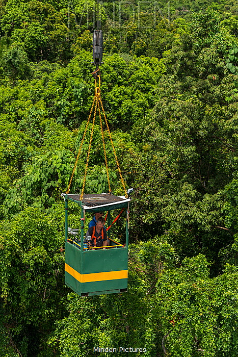 Scientist Dr Raymond Dempsey researching rainforest treess response to wet-dry seasonal transition from special research crane. Daintree Rainforest Observatory, Queensland, Australia. February 2015