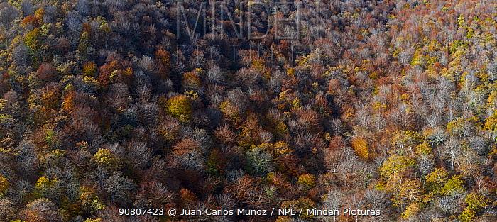 Aerial view of Beech forest (Fagus sp) Ermita de Irias, San Pedro de Soba, Soba Valley, Cantabria, Spain. November.