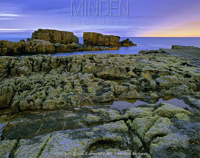 Black granite schist covered in grey-green lichen at twilight. Hopeman Bay, Hopeman, Moray, Scotland.